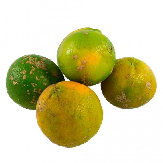 Limão Cravo Orgânico (500g)